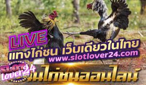 ติดตามผล เพจถ่ายทอดสด ไก่ชน ไม่พลาดจังหวะการทำเงิน , ไก่ตีทีเด็ด – ศูนย์รวมถ่ายทอดสดไก่ชนทั่วไทย kaiteetded