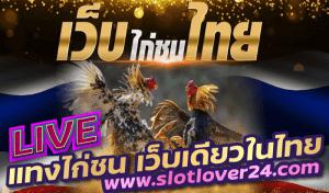 ไก่ตีทีเด็ด ศูนย์รวม ถ่ายทอดสดไก่ชน ทั่วไทย ครบวงจร